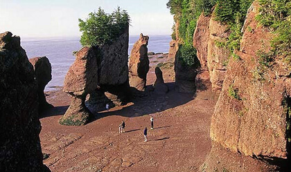Fundy, Fossils and Flowerpots