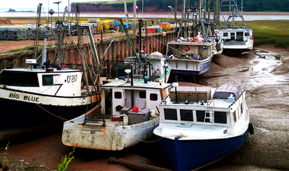 Fishing Boats sitting on the red mud of low tide in the Bay of Fundy